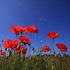 Poppys by Peet de Rouw