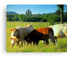 Cows Resling Canvas Print