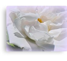 White Roses Canvas Print