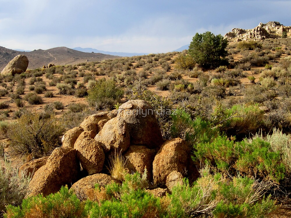 Rocks Of The Desert by marilyn diaz