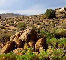 Rocks Of The Desert by marilyn diaz