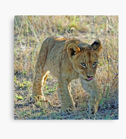 I am off to play with my friends ! Canvas Print