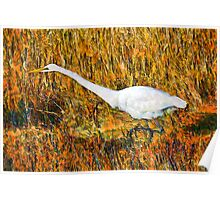 Stalking Great Egret Poster