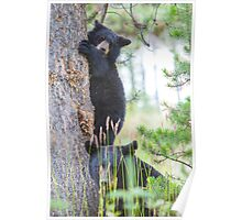 Baby Bear and Momma Poster