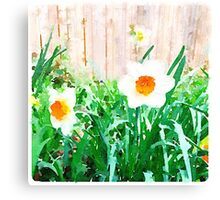 Painted Daffodils Canvas Print