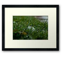Hidden Hail Framed Print
