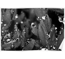 macro flora 038 Poster