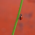 Travel of a Ladybug by natureloving