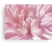 Softly Pink Canvas Print