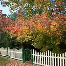 Autumn in Warners Bay, Australia by Robyn Selem