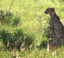 Savannah Watching by JenniferEllen