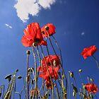 Summer poppys by Peet de Rouw