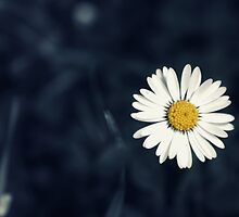 Fresh as a Daisy by Vicki Field