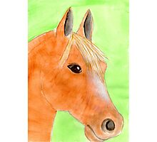 pretty filly Photographic Print