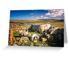 Sheep in Church Greeting Card