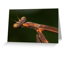 Archimantis latistyla Greeting Card