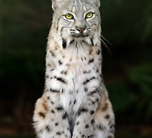 Divinity - Birthday Card by Big Cat Rescue