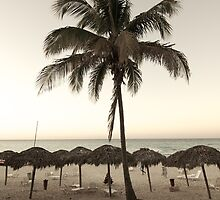 Palm Tree by Janice Chiu