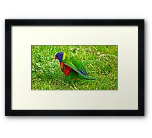 Little feathers Framed Print