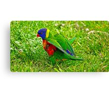 Little feathers Canvas Print