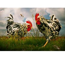 Roosters Photographic Print