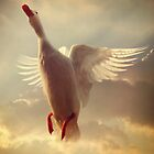 Yet Another White Duck by ajgosling