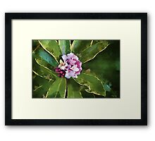 Beautiful in Pink Framed Print