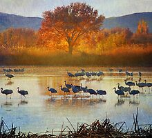 the cranes return by R Christopher  Vest