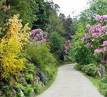The  Rhododendrons at Cragside by Morag Bates