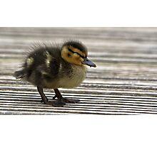 The Sleepy Duckling.. Photographic Print