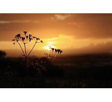 Farley Hill Photographic Print