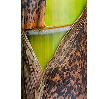 half-naked green Photographic Print