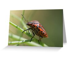 Italian Striped-Bug Greeting Card