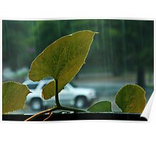 Rain and Gourd Leaves Poster