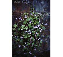 Purple Bunch Photographic Print