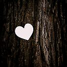 Heart & Tree by Amanda Vontobel Photography