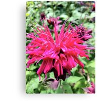 Pink Balming Bee it Canvas Print