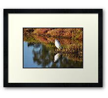 Egret in Marin Framed Print