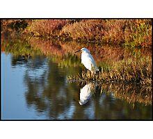 Egret in Marin Photographic Print