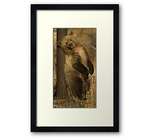 Grizzly Cub-Signed-#5174 Framed Print