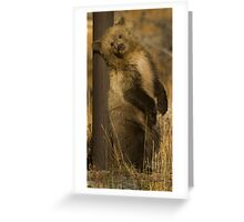 Grizzly Cub-Signed-#5174 Greeting Card