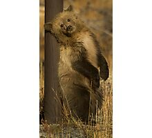 Grizzly Cub-Signed-#5174 Photographic Print