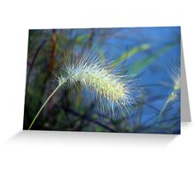 Little Bunny Fountain Grass Greeting Card