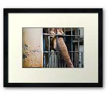 Captivity Framed Print