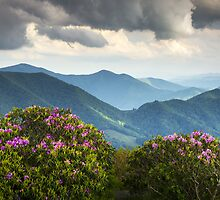 Blue Ridge Appalachian Mountain Peaks and Spring Rhododendron Flowers by Dave Allen