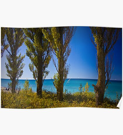 Row of Cypress Trees at Point Betsie Poster