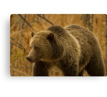 Grizzly Sow-Signed-#1643 Canvas Print