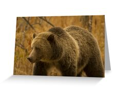 Grizzly Sow-Signed-#1643 Greeting Card