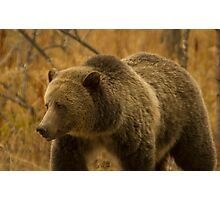 Grizzly Sow-Signed-#1643 Photographic Print