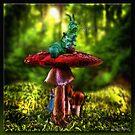Wonderland by Richard  Gerhard